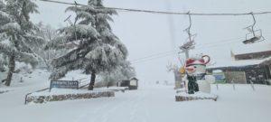 אתר החרמון,שלג,בובת שלג,עץ