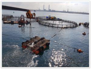 מפעל דיג של דג סוף