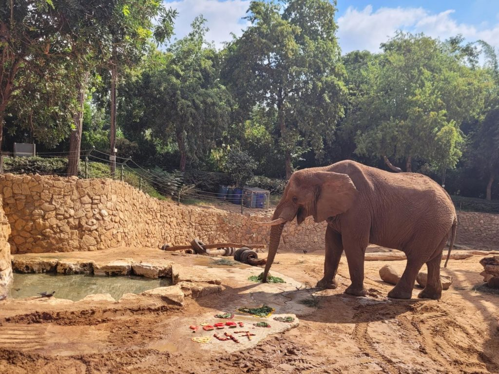 יוסי הפיל