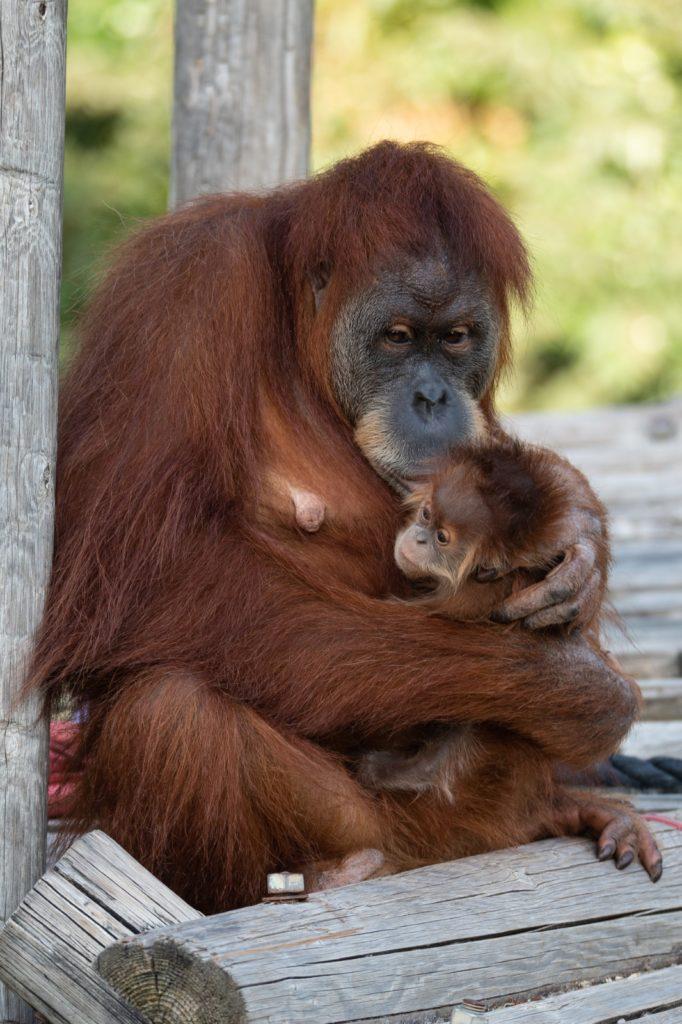 האם והתינוק למשפחת אורנג׳טאון